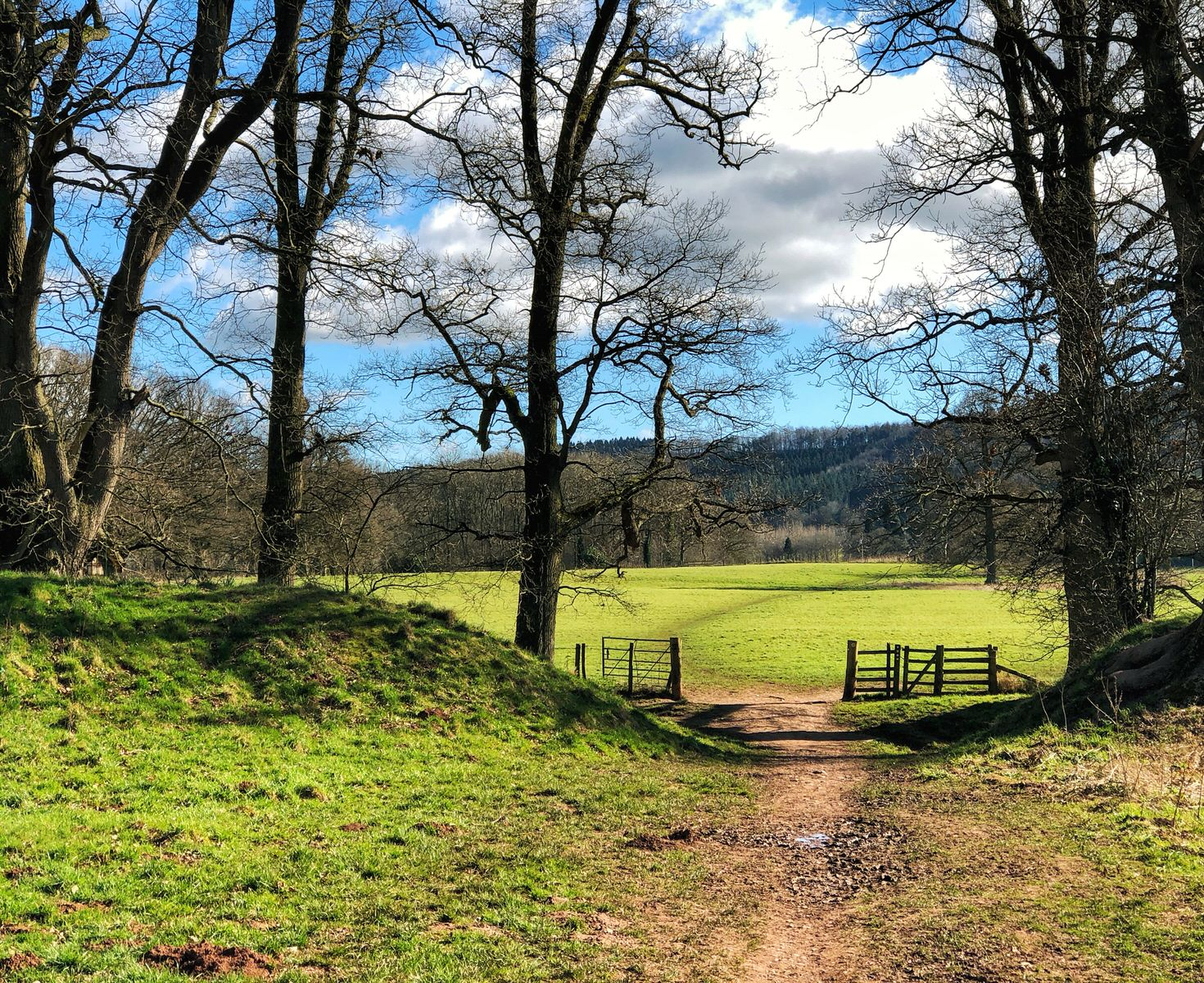 Green space in Herefordshire countryside, early spring