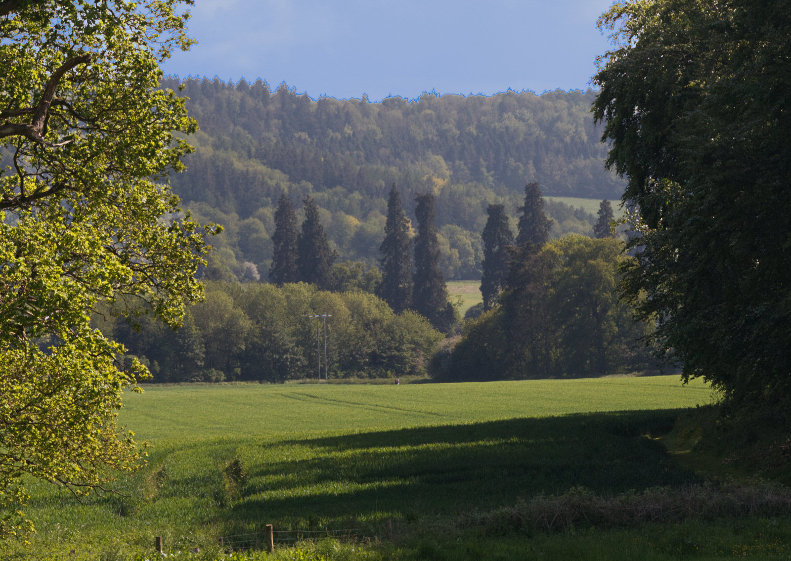 Green field with dark green hillside beyond and blue sky -- growing season