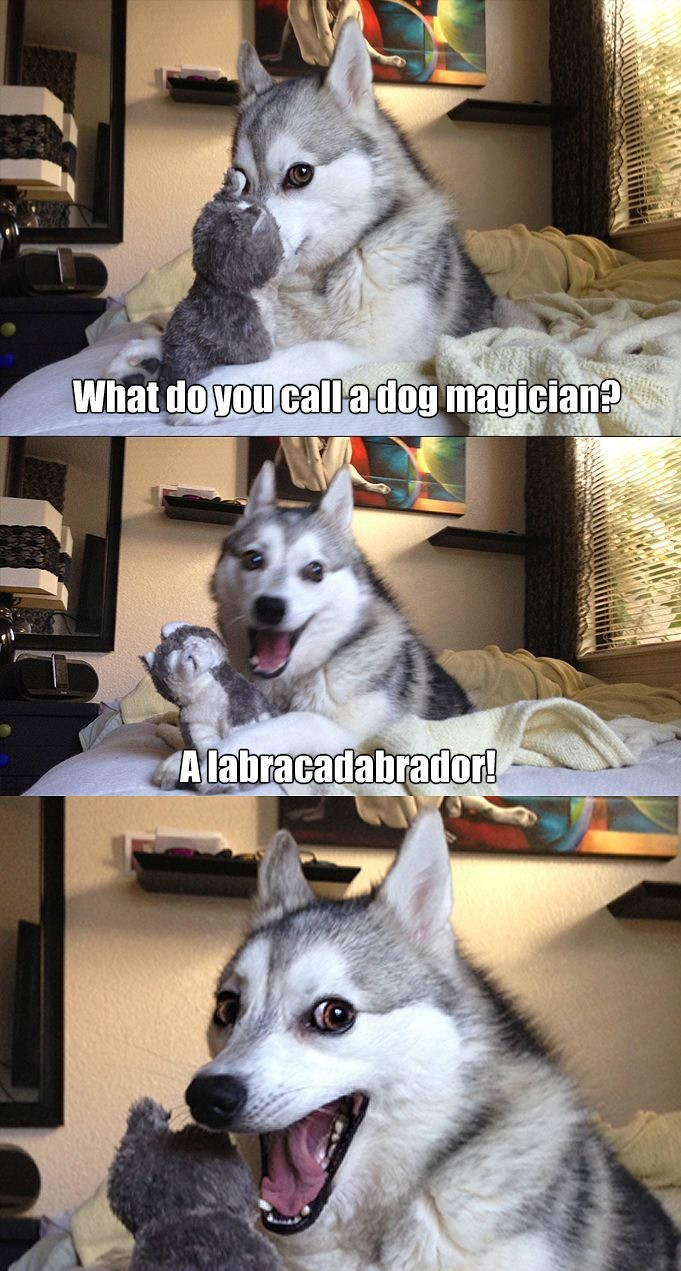 pun-dog-strikes-again_o_2824469