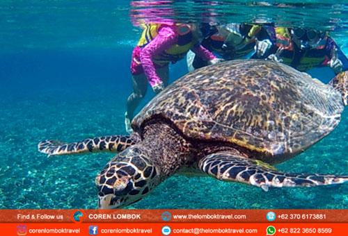 Gili Trawangan And Gili Meno Snorkeling Trip From Lombok