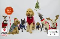 Dog Christmas Jumper Day | The Londog