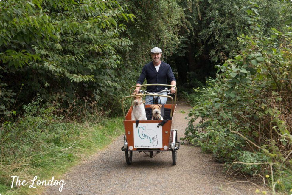 Dogs on cargo bike in East London