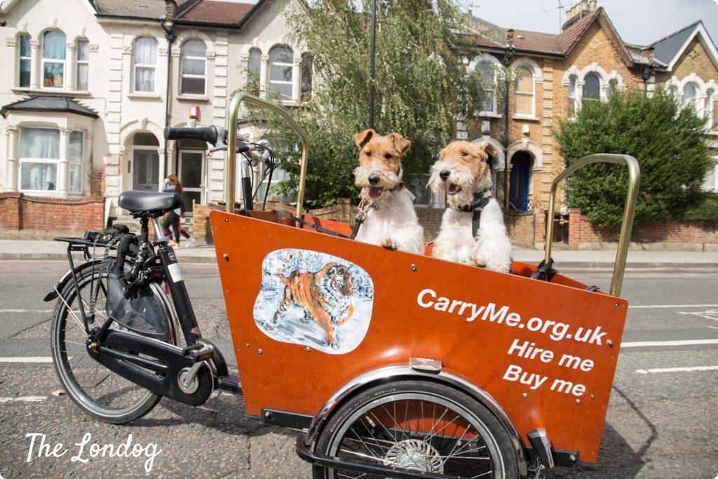 Dogs on cargo bike in London
