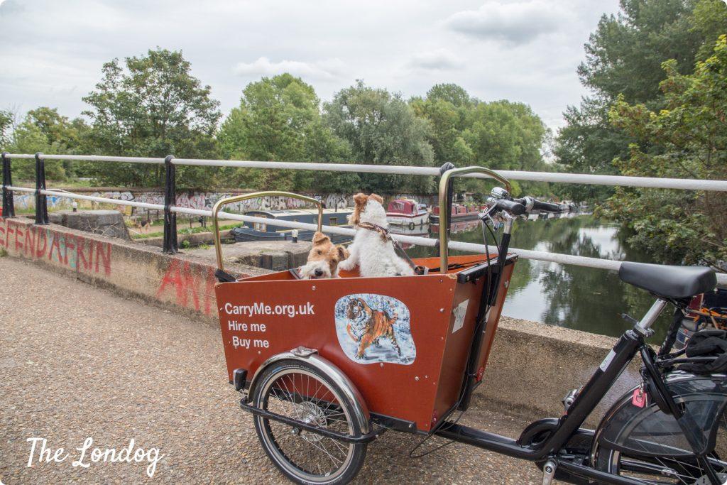 Dogs on cargo bike on river Lee in London