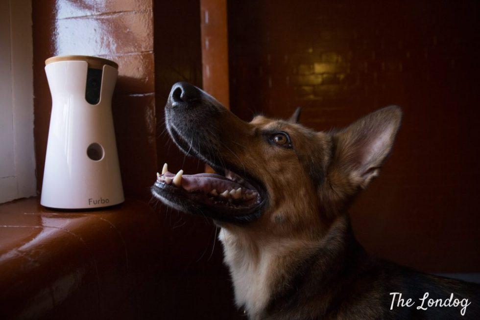 Smiling dog near Furbo dog camera