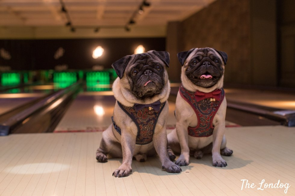 Dogs at bowling lanes