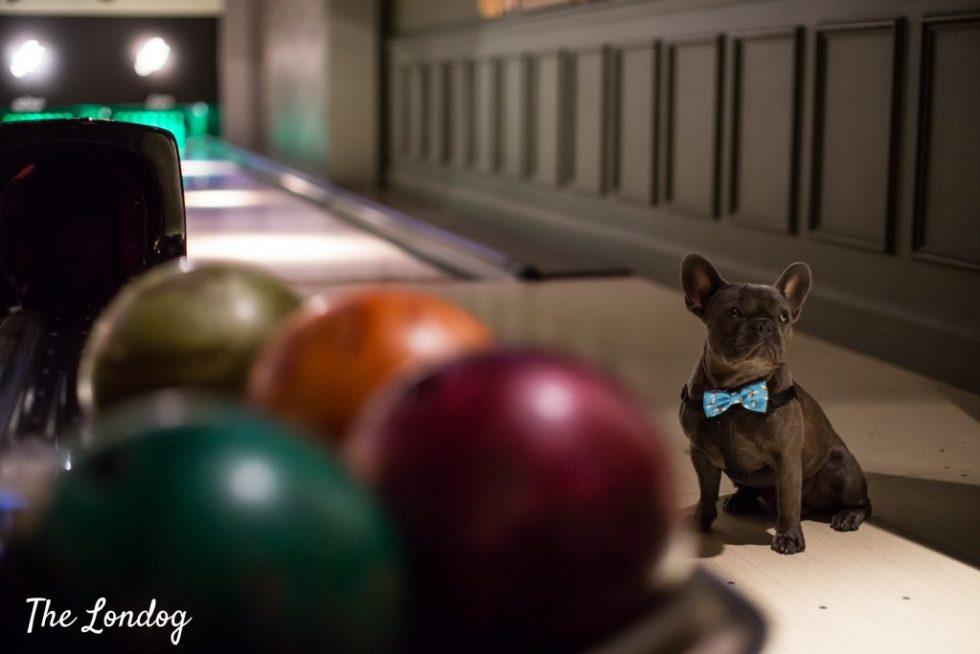 Dog on bowling lanes