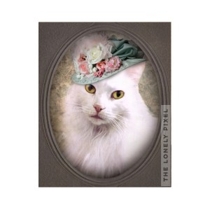 Angora Cat Portrait