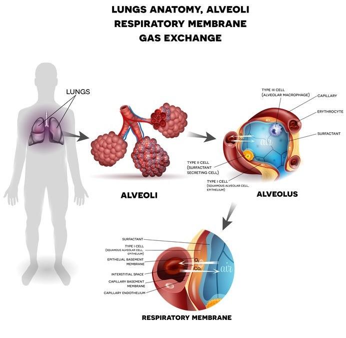 How Better Breathing Works