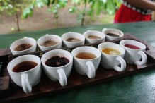 Tea and Coffee tasting. Jamie's favourite was Manggosten Tea and Jade's was Gingseng Coffee