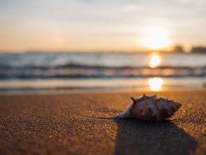 shell, beach, seaside