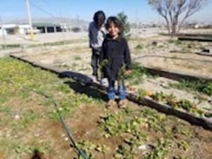 two girls harvesting vegetables in the garden