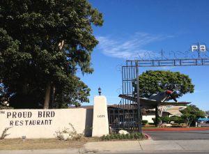 The Proud Bird (photo by Nikki Kreuzer)