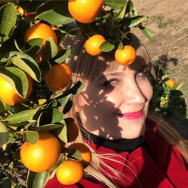 Sweet oranges  are a bountiful pick in La Verne (photo by Nikki Kreuzer)