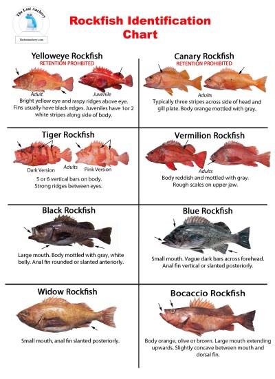Rock fish fishing tutorial for California fish and game regulations