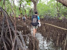 As we arrived on low tide, we had to walk through the mangrove to get to our resort at Two Fish.
