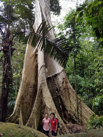 The giant tree, you can't miss it, esp on the way down!