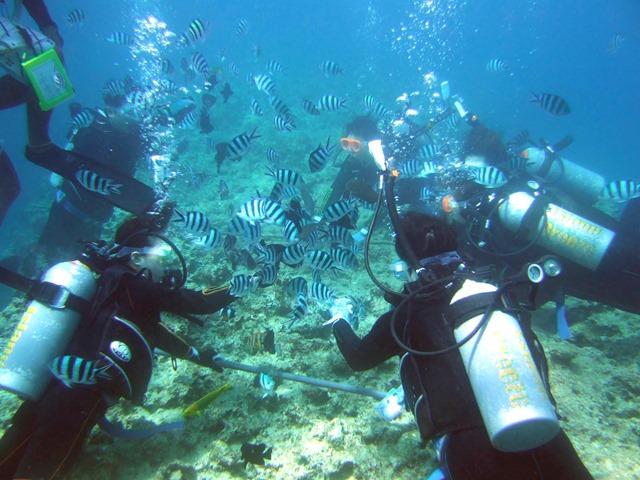 Okinawa Divers Please Credit to © Okinawa Convention&Visitors Bureau
