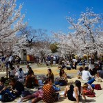 Hunting for Sakura (Cherry Blossoms) in Osaka and Kyoto