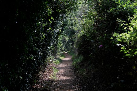 footpath Walberswick