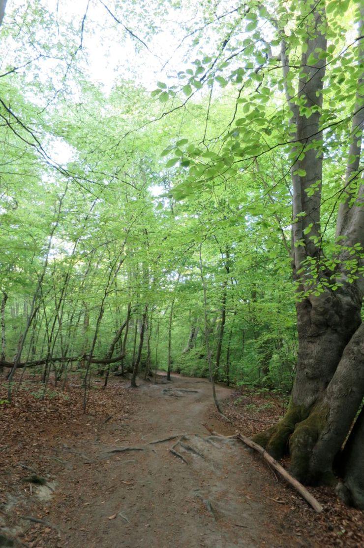 Debden's Slade Epping Forest