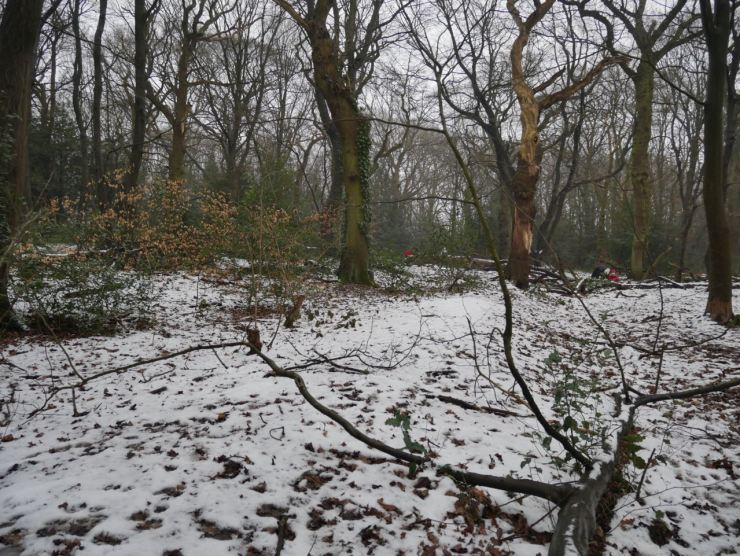 ancient earthwork Highgate Woods