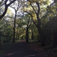 'Winter Time' Walk in Epping Forest