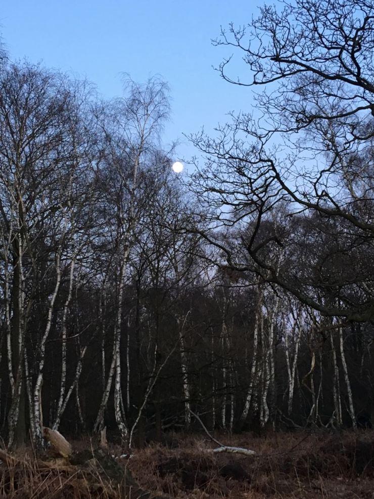 Deershelter Plain
