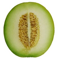 Cross-section of a melon