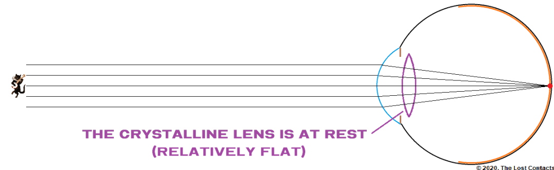 The Crystalline Lens at Rest