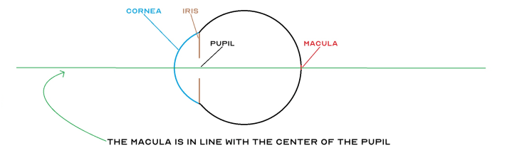 Diagram illustrating that macula is in line with the center of the pupil