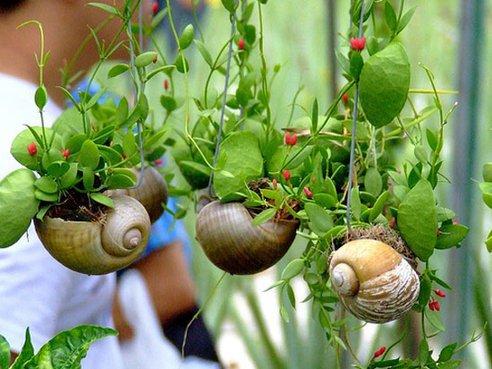 snail-shell-garden-megan-andersen1_large