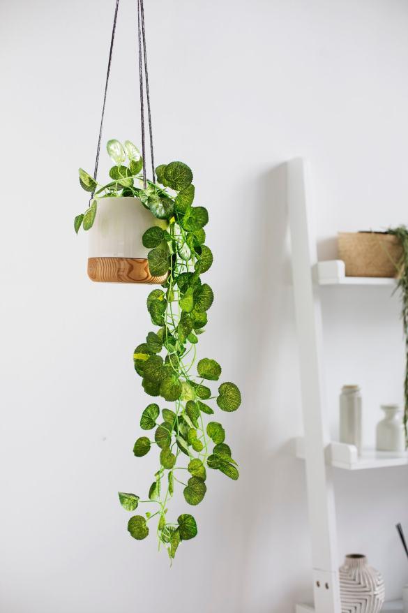 Hanging plant ideas