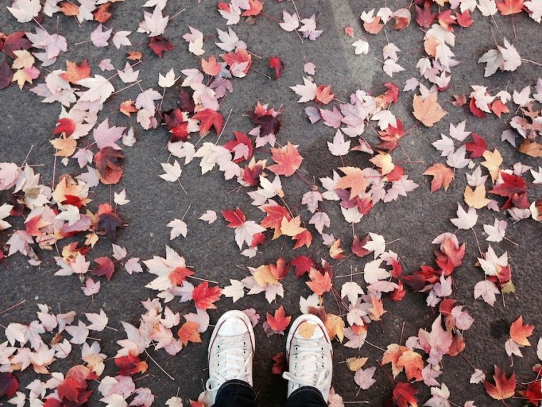 Fall Bucket List   25 Affordable Fall Activities