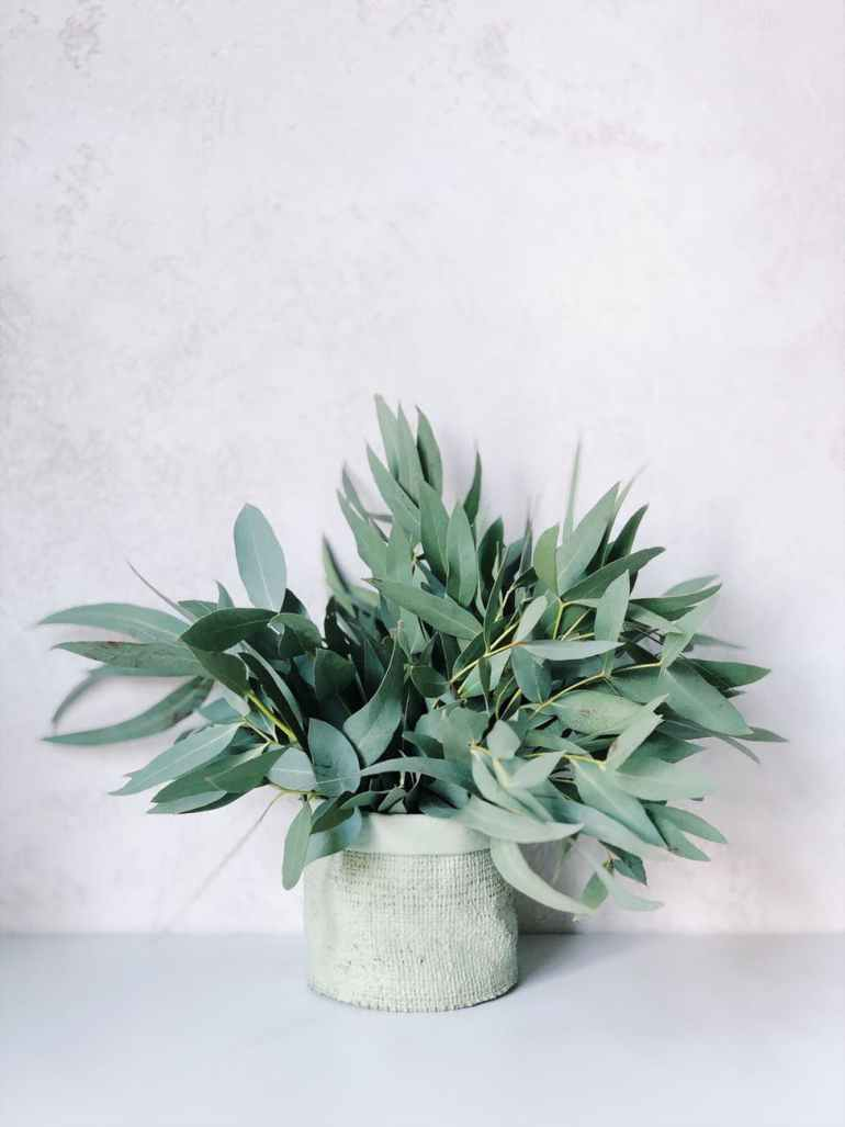 8 Plants you Need for your Bathroom   Luxuriously Thrifty