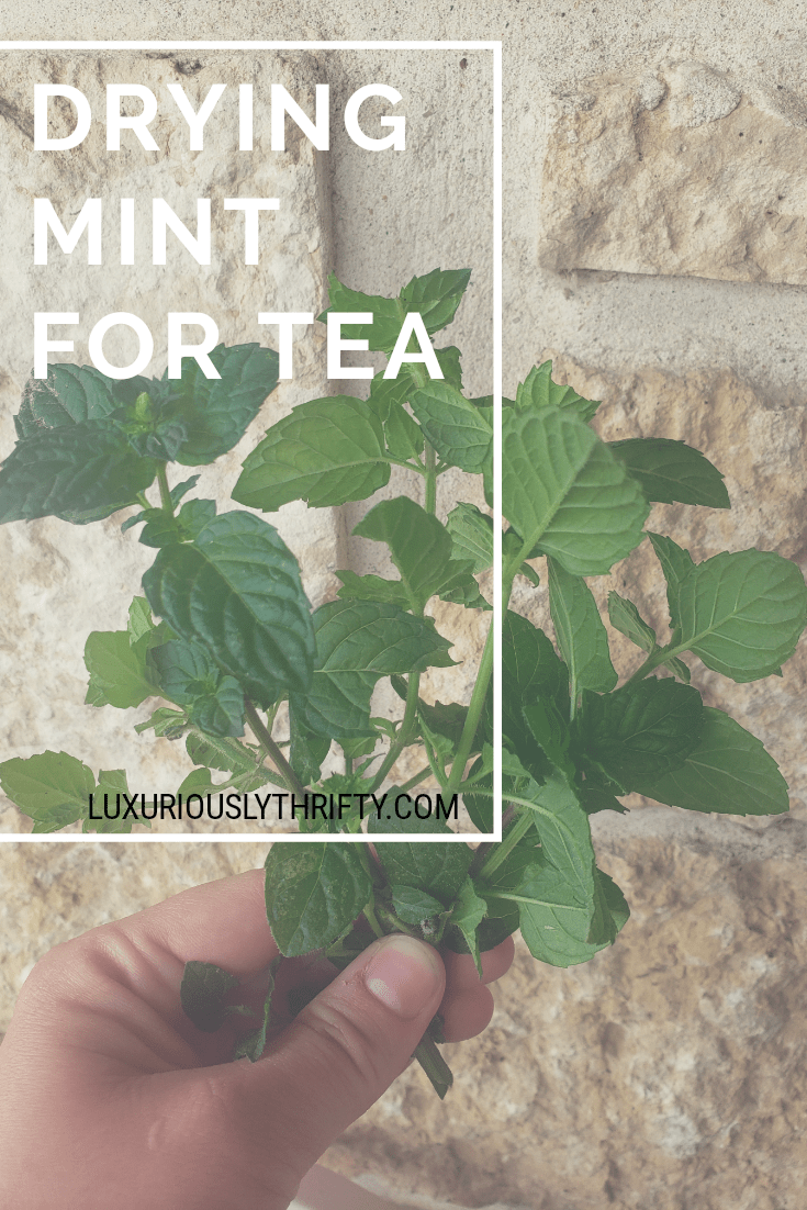 Dry mint for easy peppermint tea | Luxuriously Thrifty