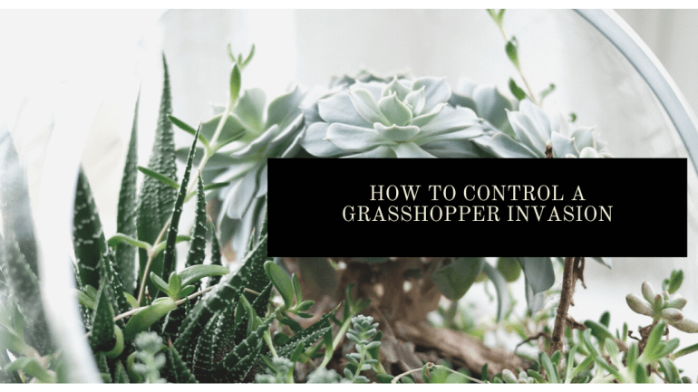 how to get rid of grasshoppers in your garden | Luxuriously Thrifty