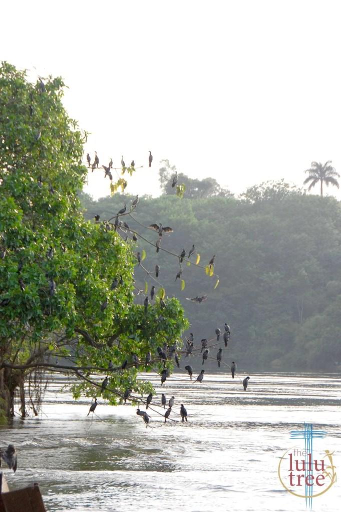 birds 5