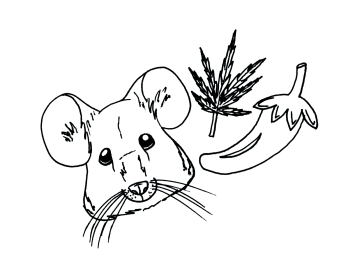 Mice, Spice and weed
