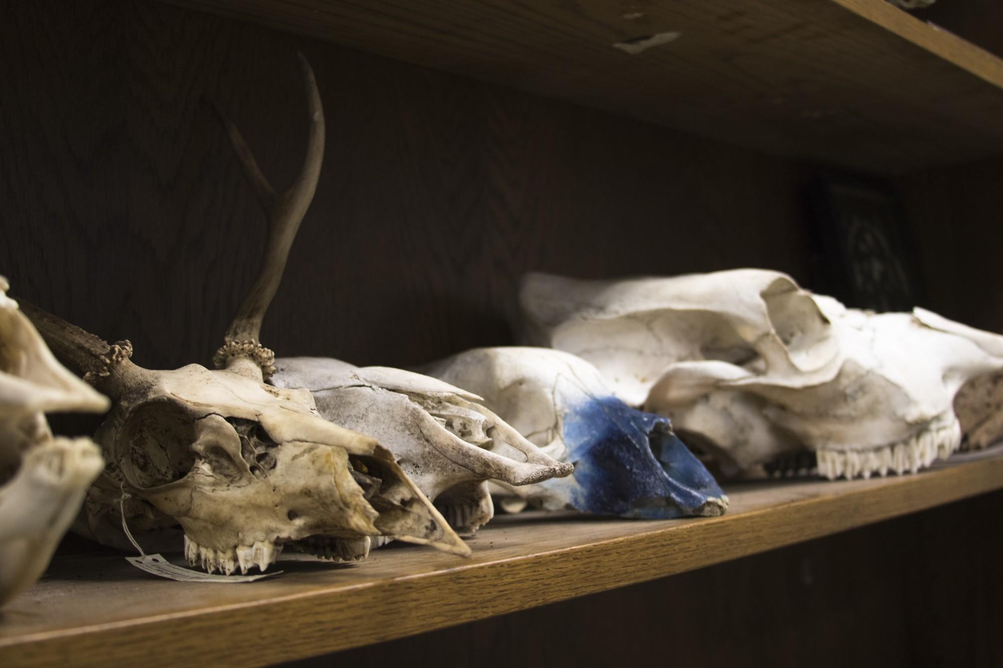 Cadaver Lab-5.jpg