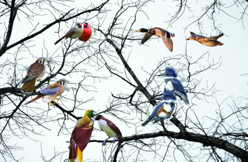 Sweet Songs, Fancy Feathers, Birds Bang