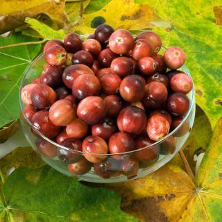 Cranberry Primer