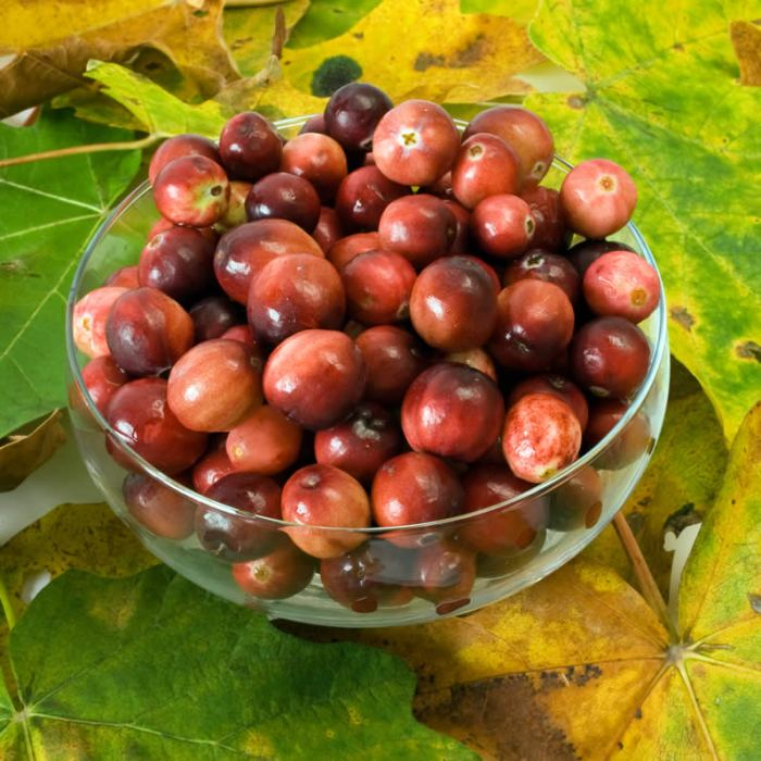 Fresh Northwest Cranberries