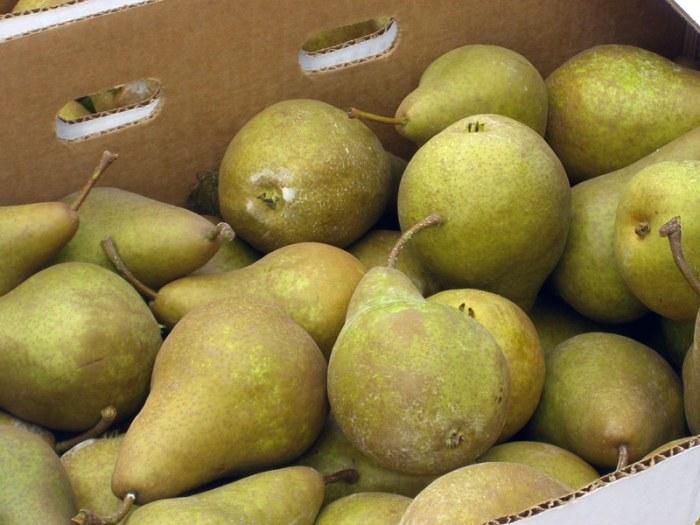 Hood River Bosc Pears