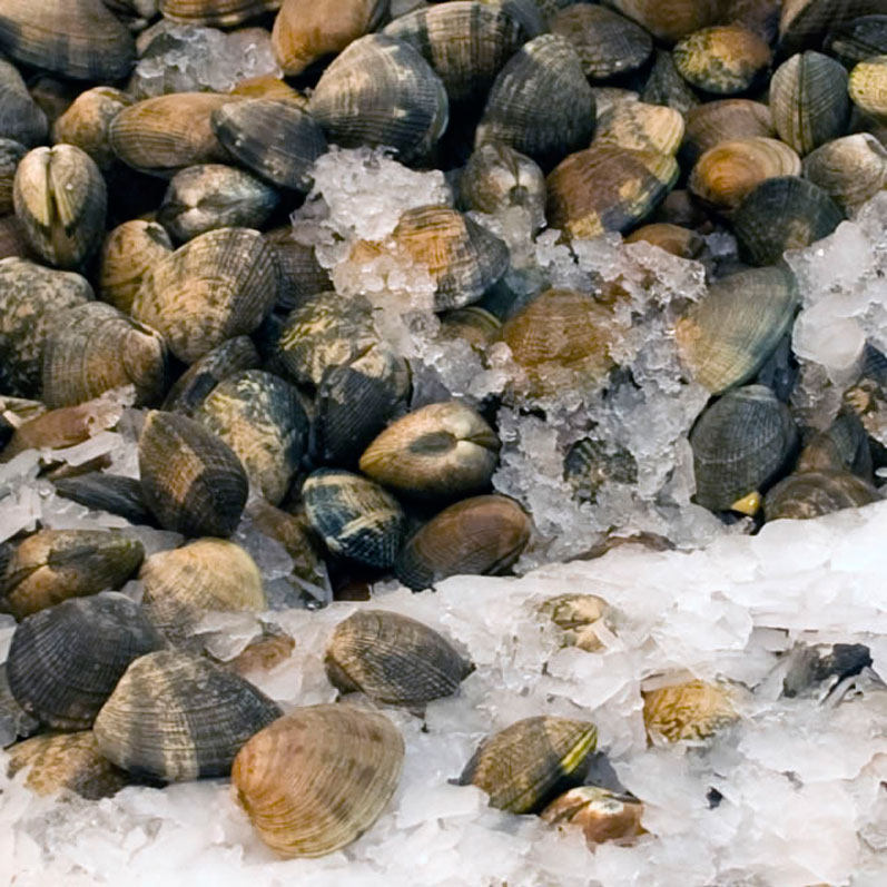 Manila Clams at Pike Place Market in April