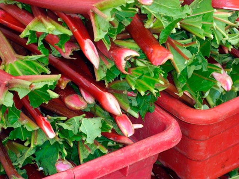 Northwest Spring Rhubarb