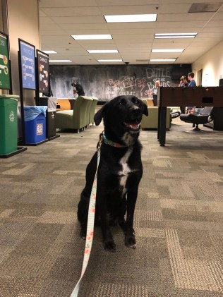 Sadie Stark enjoying her time in the Student Center. Photo by Shaylea Stark.