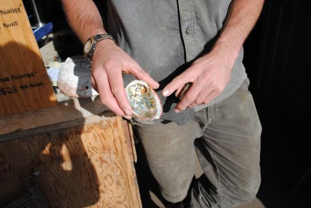 Abalone farming benefits Monterey Peninsula