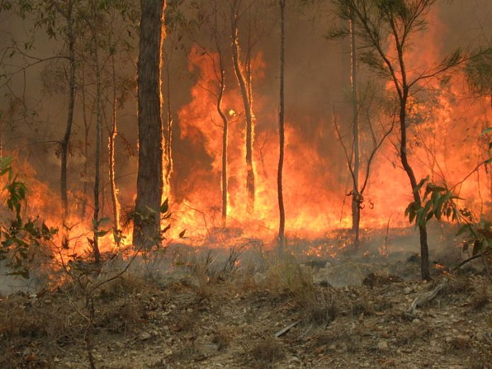 A bush fire from 2010 that spread across Captain Creek in Queensland, Australia. Photo courtesy of Wikimedia Commons.