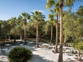Palm_Terrace